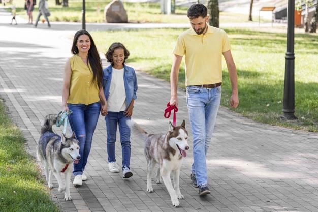 Certificado de Adestrador de cães por competência: veja como obter