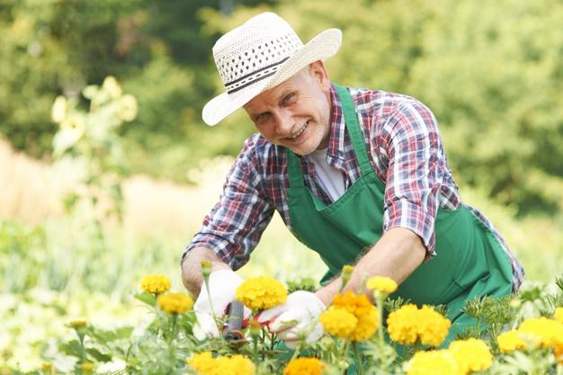 Certificado de Agricultor orgânico por competência: veja como obter