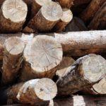 cubador de madeira