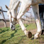 domador de cavalos