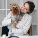 esteticista de animais domésticos